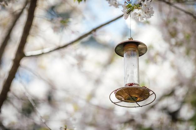 Lanterne brune pendue sur un arbre