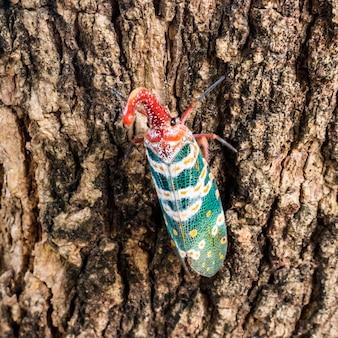 Lanternfly (insectes lanternes) sur un arbre