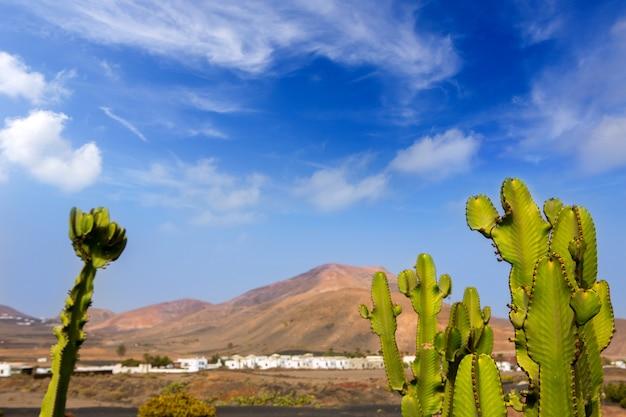 Lanzarote yaiza avec cactus et montagnes