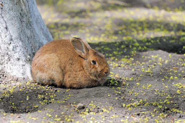 Lapin assis sous un arbre au printemps