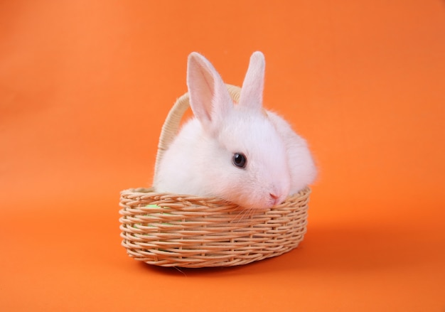 Lapin blanc dans le panier en bois sur fond orange