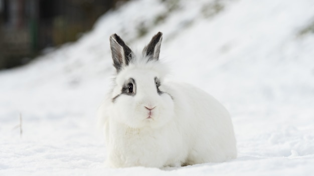 Lapin blanc et mignon assis dans la neige. l'hiver à krasnaya polyana. sotchi, russie.
