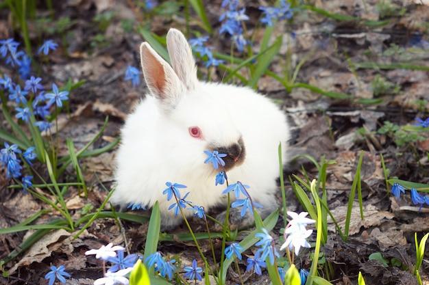 Lapin blanc moelleux dans le pré de fleurs bleues