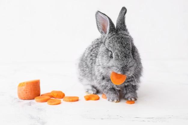 Lapin drôle mignon mangeant des carottes