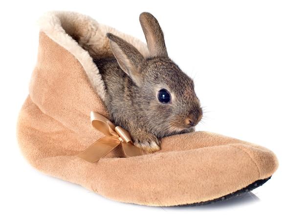 Lapin européen dans les chaussures