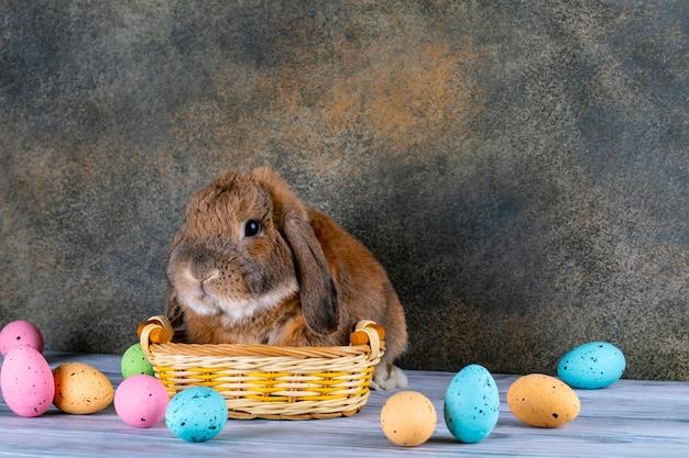 Le lapin joufflu de pâques leva l'oreille. panier en osier avec des oeufs de pâques festifs.