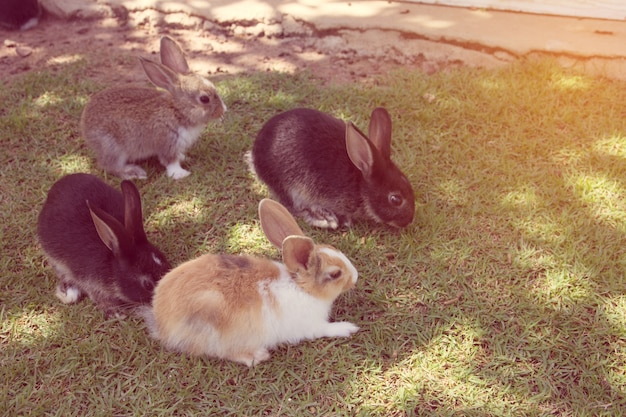 Lapin lapin dans le jardin