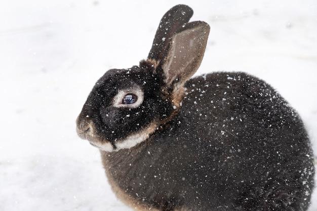 Lapin ou lièvre congelé. animal mignon, lapin avec de grandes oreilles assis sur la neige dans une journée froide d'hiver avec des chutes de neige