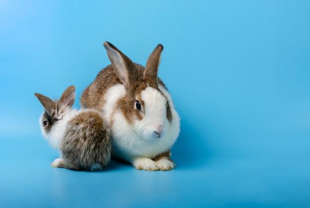 Lapin mère et lapin nouveau-né