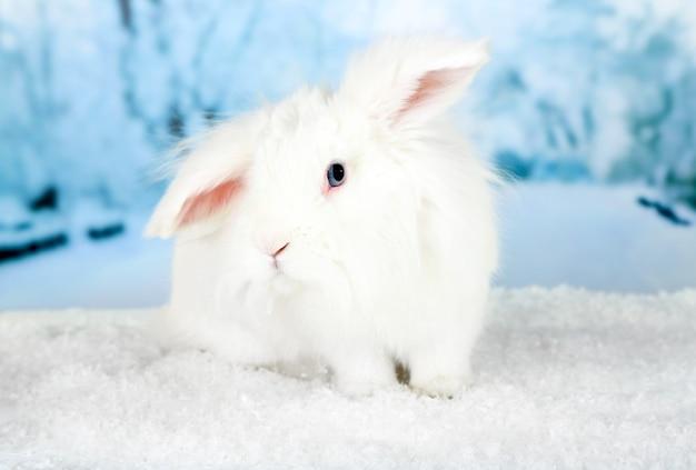 Lapin mignon blanc, sur fond d'hiver