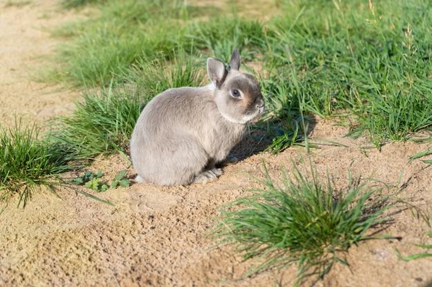 Lapin mignon sur l'herbe verte lapin décoratif à la maison à l'extérieur petit lapin