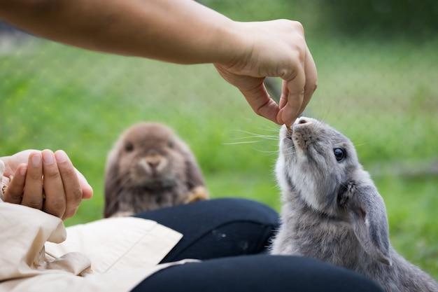 Lapin mignon mangeant de la nourriture en granulés de la main de la femme propriétaire. lapin affamé mangeant de la nourriture dans le pré. propriétaire donnant de la nourriture à ses lapins. amitié avec le lapin de pâques.
