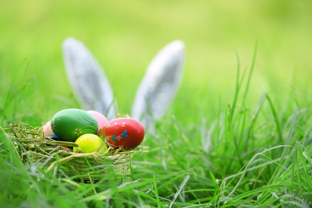 Lapin de pâques et oeufs de pâques sur le lapin oreille herbe sur le champ