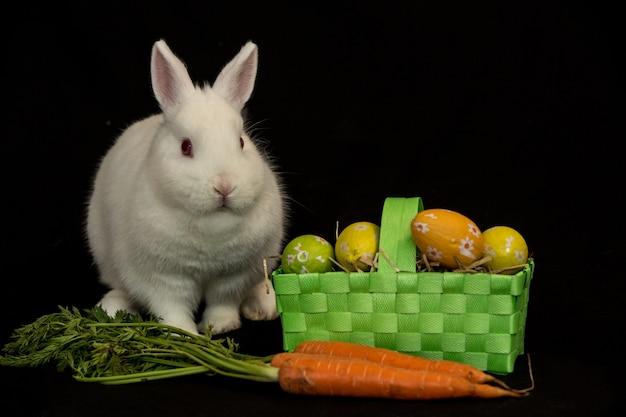 Lapin de pâques avec panier vert d'oeufs et de carottes