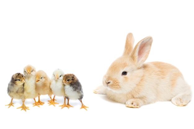 Lapin et poulet