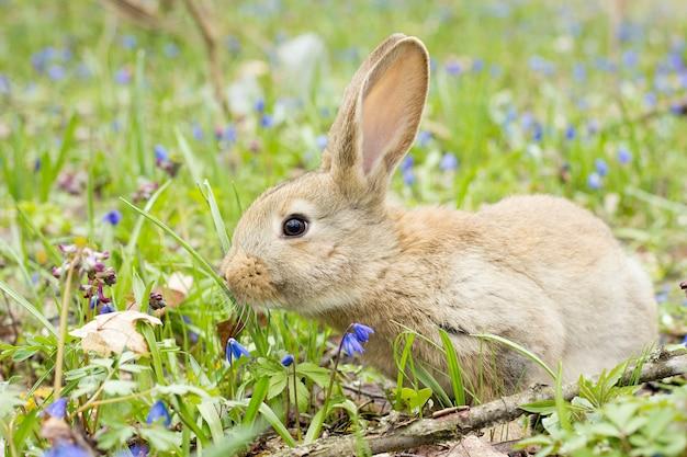 Lapin sur un pré de fleurs. lièvre sauvage dans la prairie se bouchent