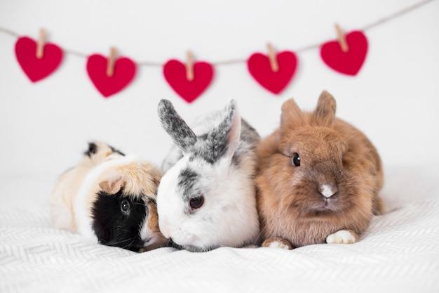 Lapins et cochon d'inde près d'une rangée de coeurs décoratifs sur un fil