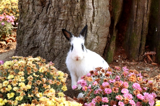 Lapins dans le jardin de fleurs