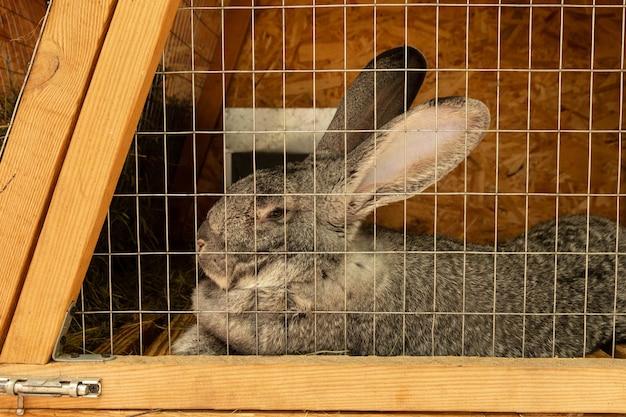 Lapins domestiques en cage. contenu, élevage en captivité.