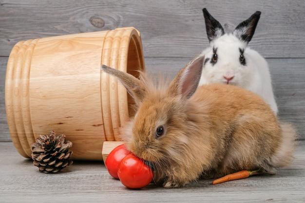 Lapins sur des planchers en bois, des carottes et des barils sur des planchers en bois