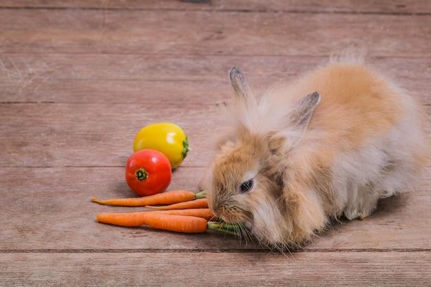 Lapins sur les planchers en bois, carottes, concombres, tomates et barils sur les planchers en bois