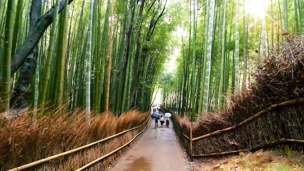 Large, bas, vue angle, de, chemin, à, sagano, arashiyama, forêt bambou, à, kyoto, japon