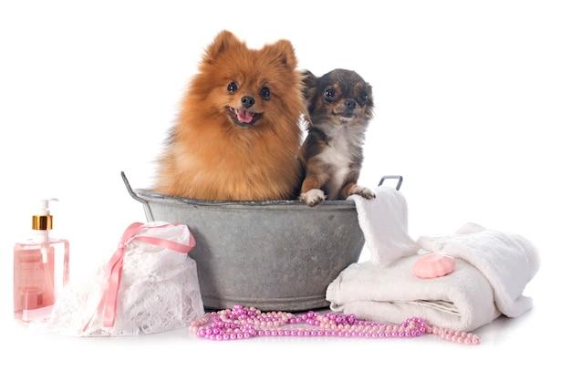Laver les chiens