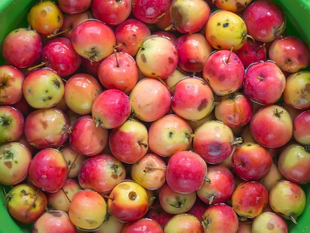 Laver les pommes dans un récipient