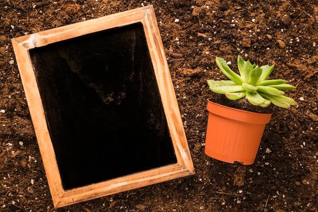 Lay plat d'ardoise à côté de la plante