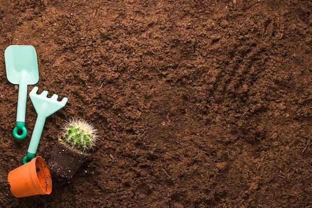 Lay plat de cactus et outils de jardinage avec fond