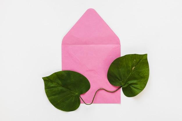 Lay plat de feuilles sur l'enveloppe
