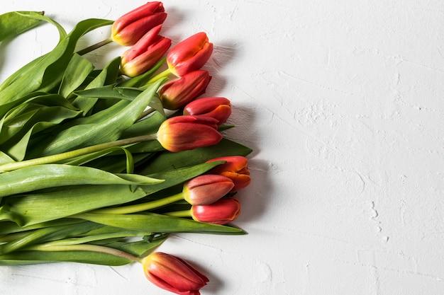 Lay plat de gros bouquet de fleurs de tulipes printanières sur fond blanc et espace de la copie de texte.
