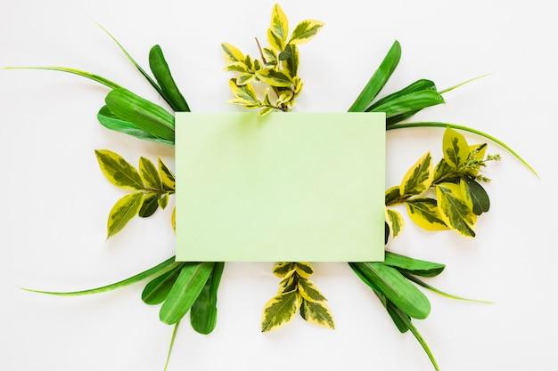 Lay plat de modèle de carte de papier avec des feuilles