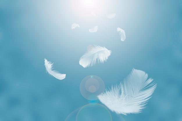 Légères plumes blanches flottant dans le ciel.