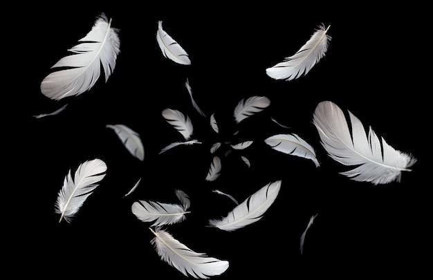 Légères plumes blanches flottant dans le noir.