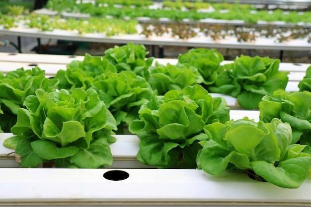 Légume bio frais en hydroponie sans terre potager innovation pour la vie