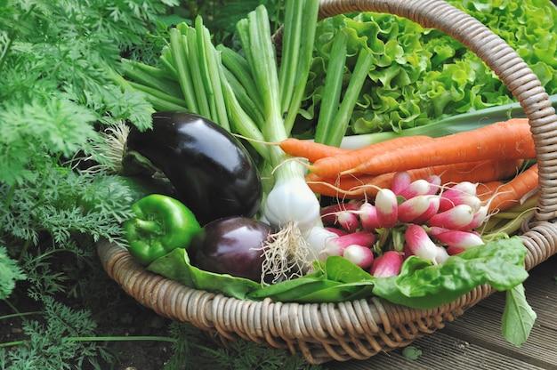 Légume frais récolté dans le jardin dans le panier
