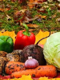 Légumes d'automne sur les feuilles d'automne