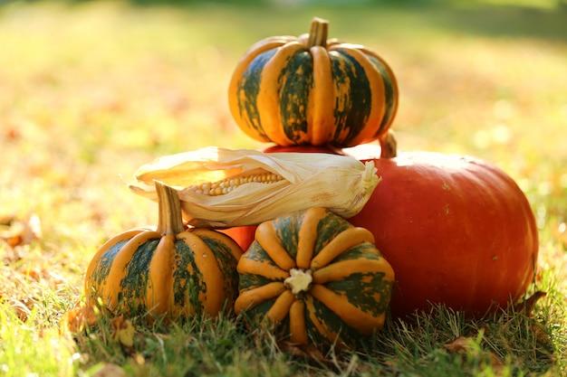 Légumes d'automne sur une pelouse