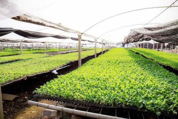 Légumes biologiques sur parcelle.