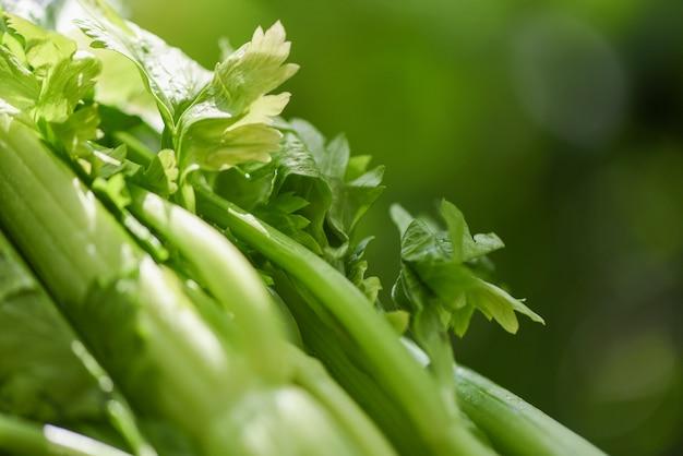 Légumes frais de céleri, branche de céleri avec des feuilles sur la nature verte