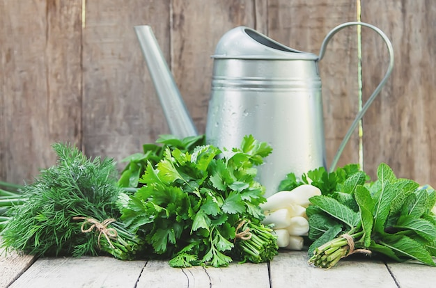 Légumes frais maison du jardin. mise au point sélective.