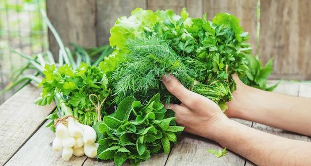 Légumes frais maison du jardin.