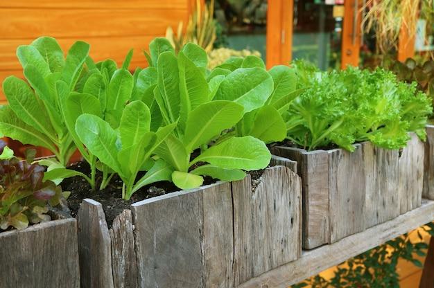 Légumes et herbes poussant dans des contenants en bois à l'arrière-cour de la maison