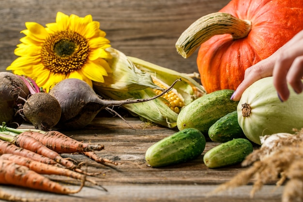 Légumes potiron et tournesols