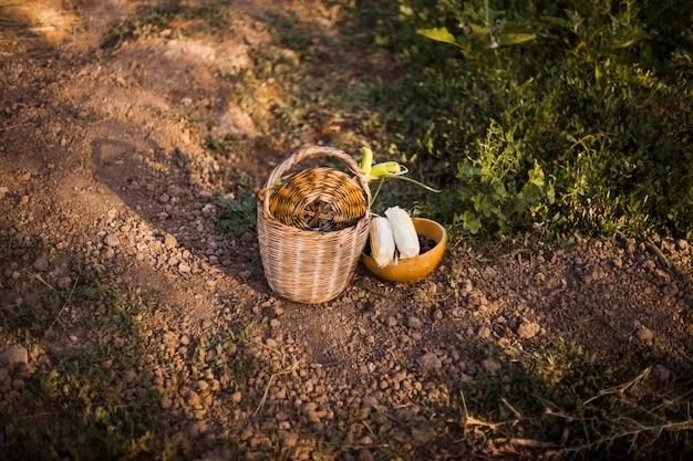 Légumes récoltés dans le panier et le bol