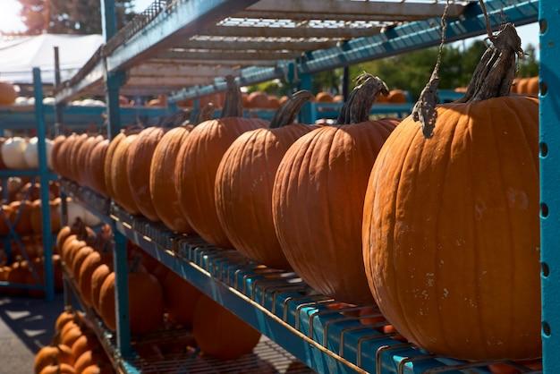 Légumes de saison d'automne, citrouille orange, citrouille jaune, sur paille, comptoir sur le marché, automne nature morte lumineuse, marché d'automne, récolte de citrouilles, aliments biologiques végétaliens.
