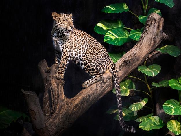 Léopard sur un arbre dans une forêt