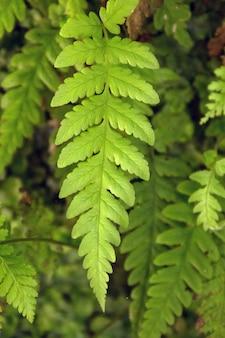 Levada de caldeirao verde
