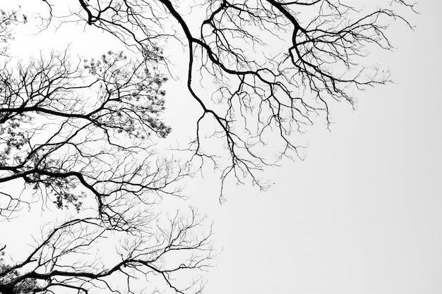 En levant dans la forêt - branches d'arbres nature abstraite - monochrome